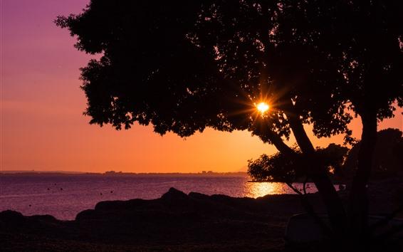 Wallpaper Tree, sunset, sea, sun rays