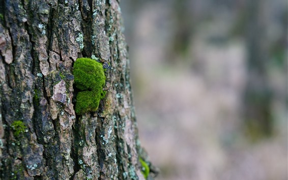 Обои Дерево, туловище, мох