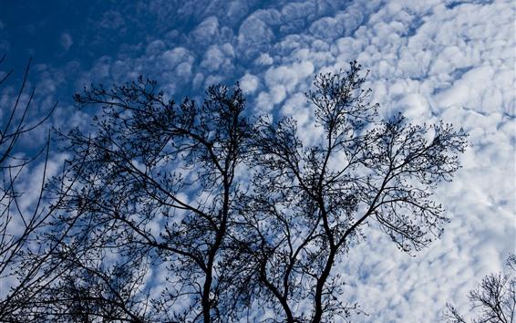 Fond d'écran Arbres, nuages, ciel