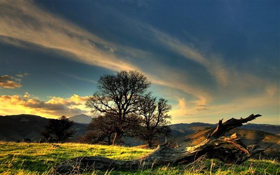Wallpaper Trees, grass, clouds, sky