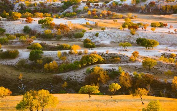 Wallpaper Trees, grass, hills, autumn, nature