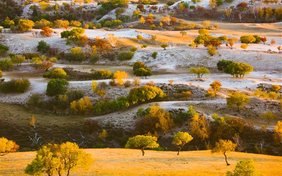 Fondos de pantalla Árboles, pasto, cerros, otoño, naturaleza.