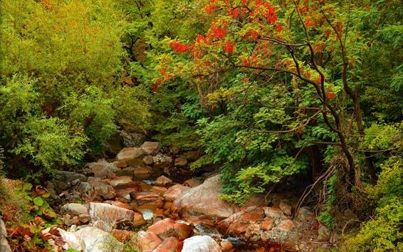 Wallpaper Trees, rocks, creek