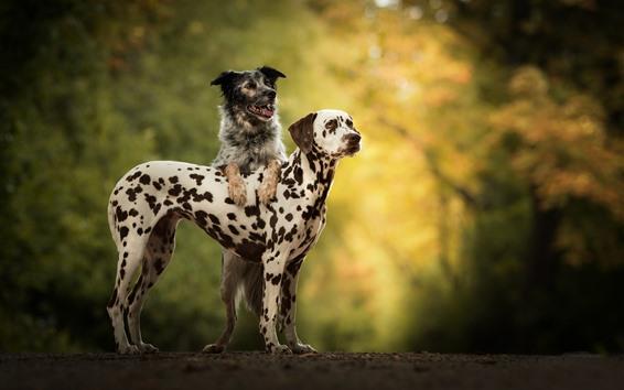 Wallpaper Two dogs, friends, spots