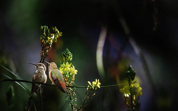 Обои Два колибри, стебель, цветы