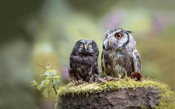 Обои Две совы, мать и куб