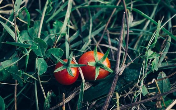 Papéis de Parede Dois tomates vermelhos, vegetal