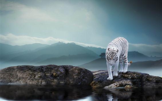 Wallpaper White tiger, rocks, pond, fog, morning