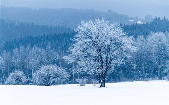 Wallpaper Winter, snow, trees, white world