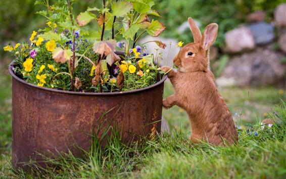Papéis de Parede Um coelho marrom, flores, prado