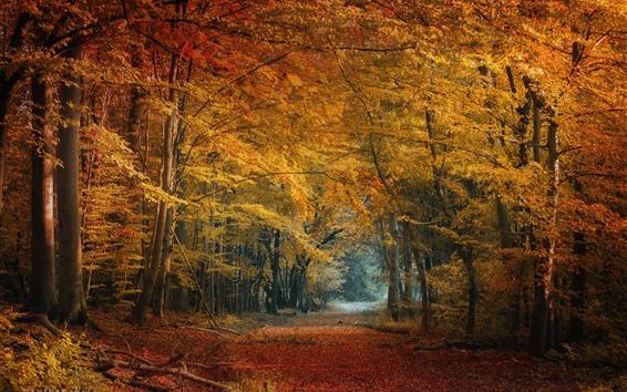 Fondos de pantalla Otoño, bosque, árboles, hojas amarillas y rojas.