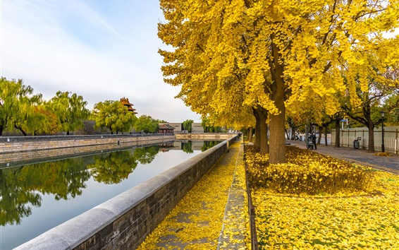 Wallpaper Autumn, river, trees, yellow leaves, park, China