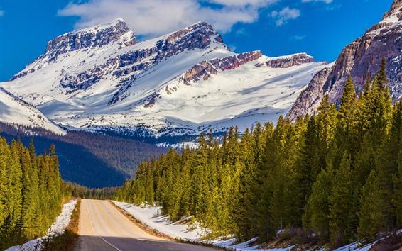 Обои Национальный парк Банф, Канада, деревья, дорога, гора, снег