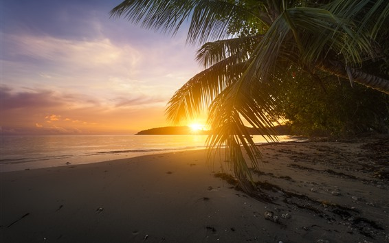 Wallpaper Beach, palm tree leaves, sunset, glare