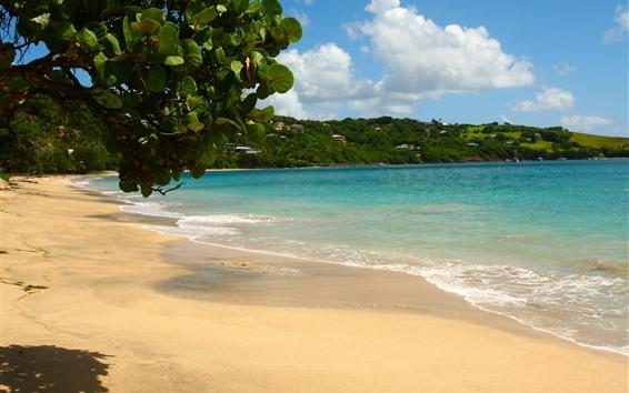Fondos de pantalla Playa, mar, hojas, olas, tropical.