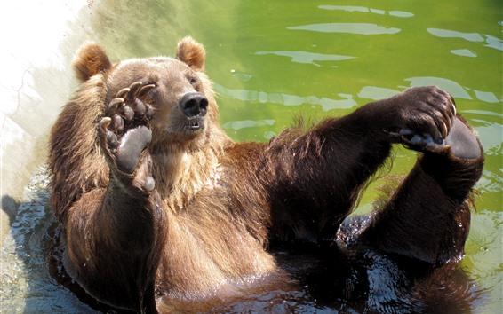 Papéis de Parede Urso joga água, jardim zoológico