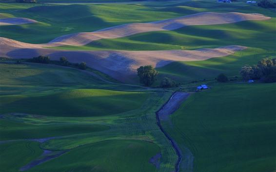 Fondos de pantalla Hermoso campo, campos de trigo verde, Palouse, EE.UU.