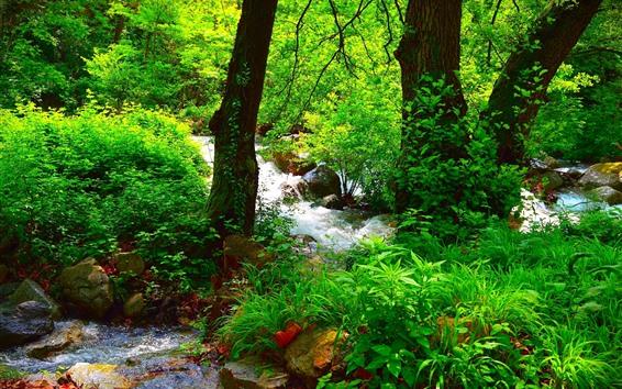 Fondos de pantalla Hermoso bosque de verano, verde, árboles, rocas, arroyo.