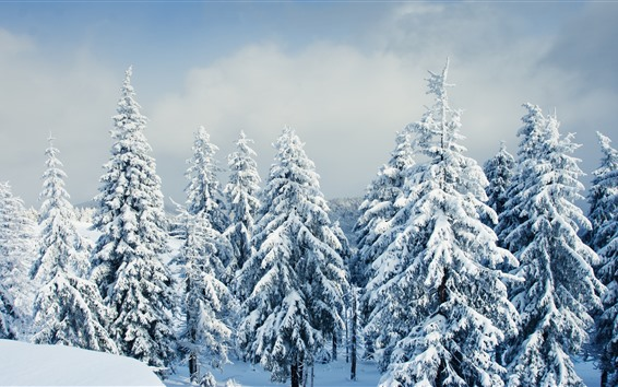 Wallpaper Beautiful winter, snow, trees, forest