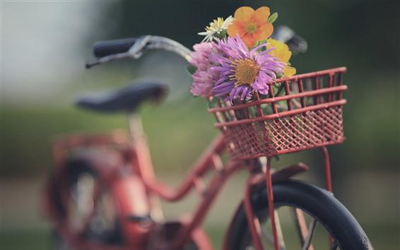 Wallpaper Bike, basket, flowers