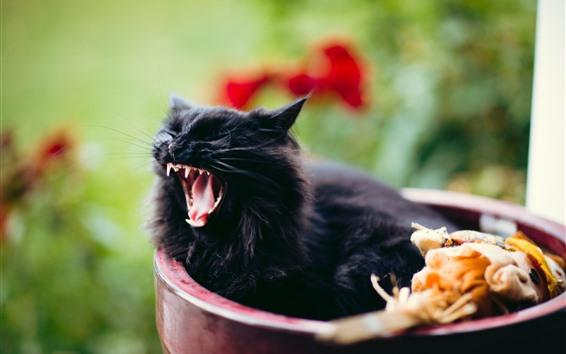 Обои Черный котенок зевает
