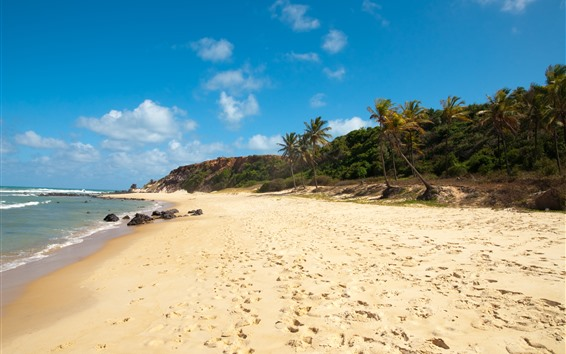 Fondos de pantalla Brasil, playa, palmeras, mar, costa.