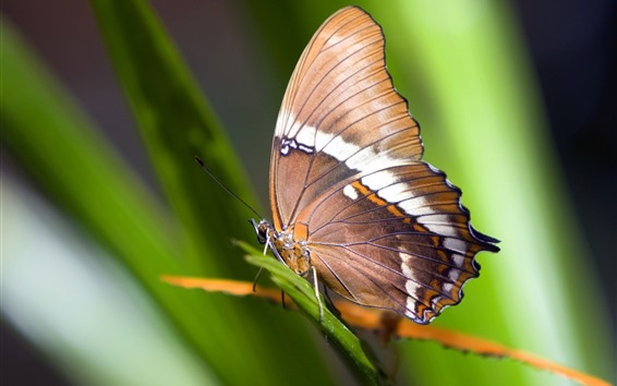 Wallpaper Butterfly, grass, green leaves
