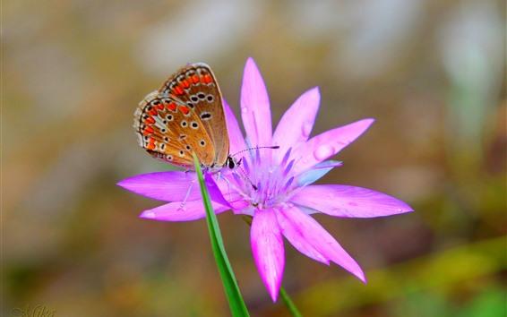 Fondos de pantalla Mariposa, orquídea rosa, pétalos, gotas de agua.