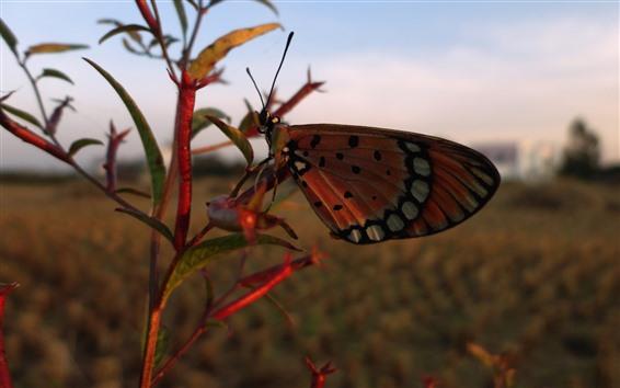Обои Бабочка, растения, сумерки