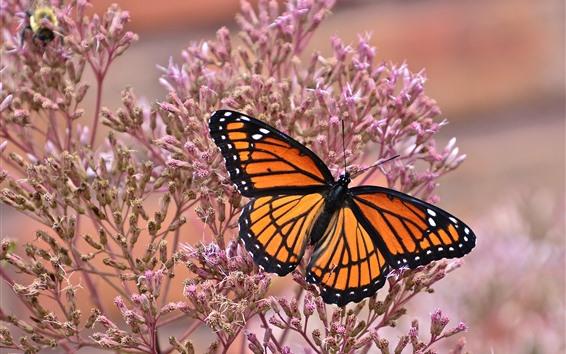 Fondos de pantalla Mariposa, alas, florecitas rosadas, insecto.