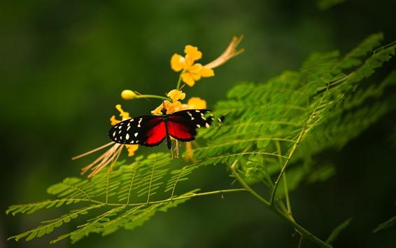 Wallpaper Butterfly, wings, yellow flowers, green plants
