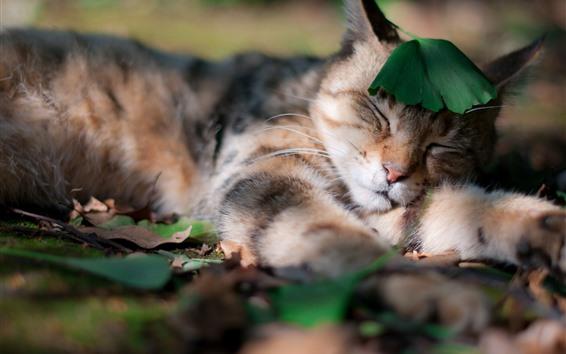 Обои Кошка Спящая, зеленый лист