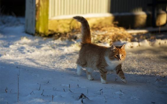 Fondos de pantalla Gato caminando en la nieve, invierno