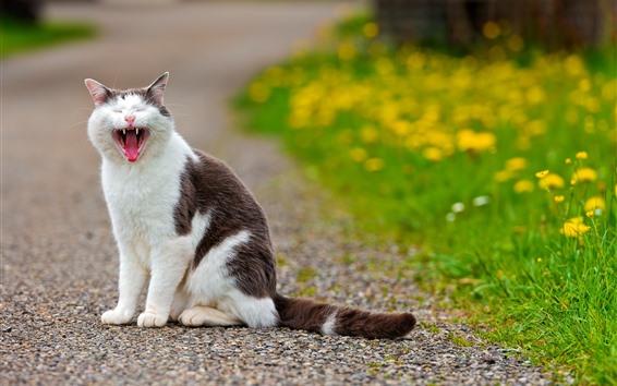 Wallpaper Cat yawn, yellow flowers