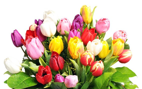 Wallpaper Colorful tulips, pink, white, yellow, red
