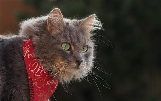 Papéis de Parede Gato bonito, lenço