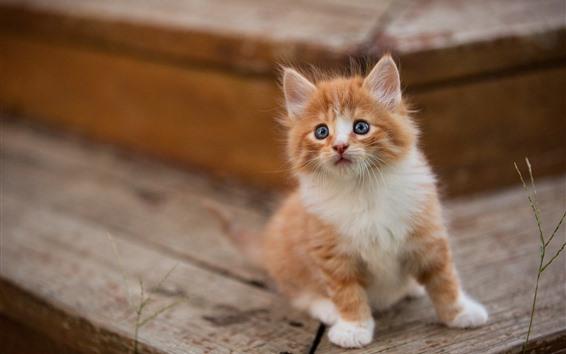 Fondos de pantalla Lindo gatito peludo, mira, brumoso