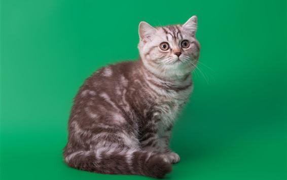 Обои Милый котенок, зеленый фон