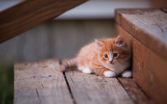 Обои Милый котенок, лестница