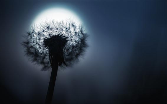Fond d'écran Pissenlit, lune, nuit
