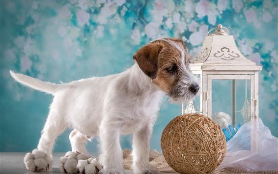 Wallpaper Dog and ball, lantern
