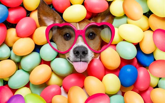 Papéis de Parede Cachorro, óculos, bolas coloridas, animal engraçado