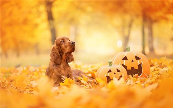 Fondos de pantalla Perro, calabaza, halloween, hojas amarillas, otoño.