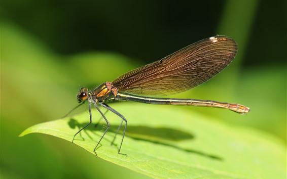 Papéis de Parede Estada da libélula na folha verde