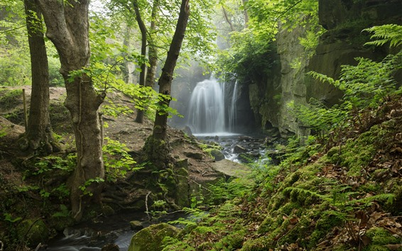 Wallpaper England, Derbyshire, Peak District, waterfall, forest