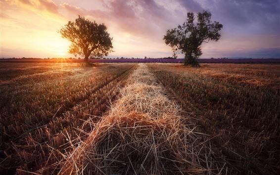壁紙 畑、ラベンダー、木、太陽の光