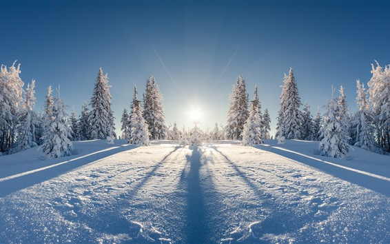 Wallpaper Forest, trees, snow, winter, sunshine, shadow