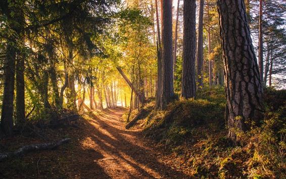 Обои Лес, деревья, солнечные лучи, тень, путь