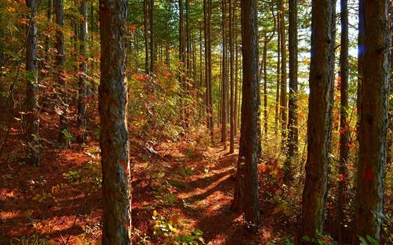 Fondos de pantalla Bosque, árboles, sol, sombra, otoño