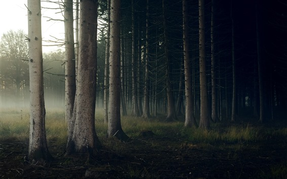 Fondos de pantalla Bosque, troncos, niebla, mañana.